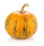 Ripe pumpkin Stock Photography