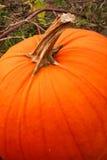Ripe Pumpkin Royalty Free Stock Photography