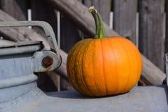 Ripe pumpkin Stock Photography