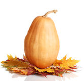 Ripe pumpkin and autumn leaves Royalty Free Stock Photography