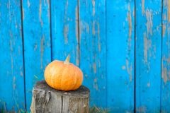 Ripe pumpkin on blue wooden background wall. Stock Images