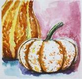 Ripe pumpkin. Harvest watercolor. Thasnkgiving Stock Photos