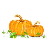 Ripe pumpkin. Realistic illustration isolated on white background Royalty Free Stock Photos