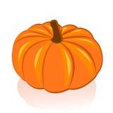Ripe pumpkin. On white background Stock Photos