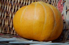 Ripe pumpkin with wicker background Royalty Free Stock Photo