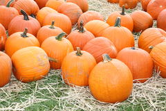 Ripe pumpkins. Closeup of ripe pumpkins outdoor on straw covered grass Stock Photo