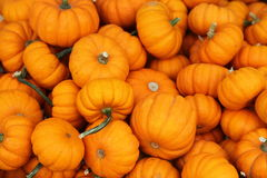 Ripe pumpkins. Seamless background of ripe, orange pumpkins Stock Photos