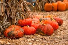 Ripe pumpkins. Closeup of ripe pumpkins outdoors Stock Images