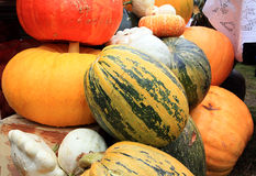 Ripe pumpkins Stock Photography