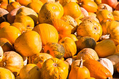 Ripe pumpkins Stock Photography