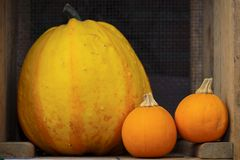 Ripe pumpkins Royalty Free Stock Photos