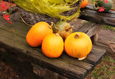 Ripe pumpkins Royalty Free Stock Photo