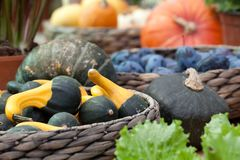 Ripe pumpkins in a basket. A harvest of beautiful mature pumpkins folded, laid in a basket royalty free stock photos