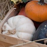 Ripe pumpkins in a basket. A harvest of beautiful mature pumpkins folded, laid in a basket royalty free stock photo