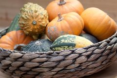 Ripe pumpkins in a basket. A harvest of beautiful mature pumpkins folded, laid in a basket stock image
