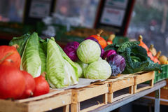 Ripe pumpkins and cabbage on farmer agricultural market. In Germany. Fresh healthy bio fruits and vegetables in grocery shop or supermarket Royalty Free Stock Image