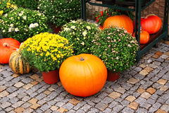 Ripe pumpkins and chrysanthemum Stock Photo