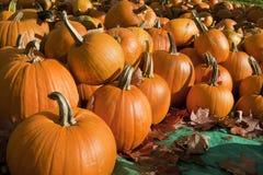 Ripe Pumpkins on Display Royalty Free Stock Photo