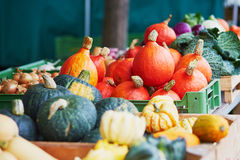 Ripe pumpkins on farmer agricultural market. In Germany. Fresh healthy bio fruits and vegetables in grocery shop or supermarket Royalty Free Stock Photography