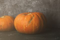 Ripe pumpkins on a green background. Toned Royalty Free Stock Photos