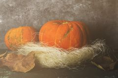 Ripe pumpkins on a green background. Toned Royalty Free Stock Images