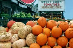 Ripe Pumpkins in a market. Halloween royalty free stock image
