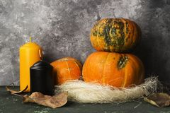 Ripe pumpkins, orange and black candle on a green background Royalty Free Stock Photo