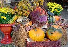 ripe pumpkins. Stock Photo