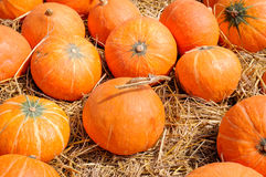 Ripe Pumpkins Pile in a Field Stock Image