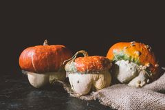 Ripe pumpkins on sackcloth. Close-up view of ripe organic pumpkins on sackcloth Royalty Free Stock Photography
