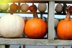Ripe Pumpkins in a shelf. Halloween. Ripe Pumpkins in a shelf. Halloween Royalty Free Stock Images