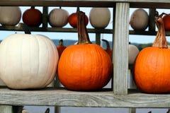 Ripe Pumpkins in a shelf. Halloween. Ripe Pumpkins in a shelf Royalty Free Stock Photo