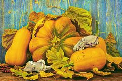 Ripe pumpkins and skulls of animals on autumn leaves Royalty Free Stock Photography