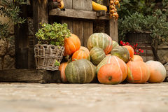 Ripe pumpkins stacked Royalty Free Stock Images