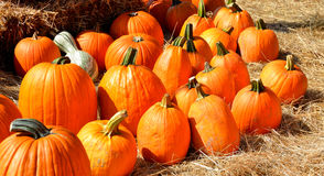 Ripe pumpkins on straw Royalty Free Stock Photos