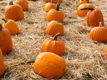 Ripe pumpkins on straw Royalty Free Stock Photography