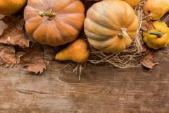 Ripe pumpkins on table. Top view of ripe pumpkins and fresh pear on rustic wooden table Stock Photography