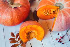 Ripe pumpkins on a white wooden table. Ripe autumn cut pumpkins on wooden table Stock Photos