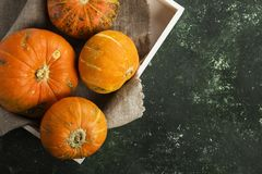 Ripe pumpkins in a white wooden tray on a green background. Top Royalty Free Stock Image