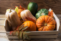Ripe pumpkins in wooden box Royalty Free Stock Photo