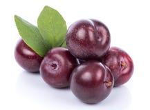 Ripe purple cherry plums Stock Photography
