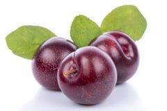 Ripe purple cherry plums Stock Photos