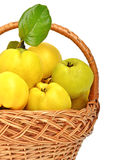 Ripe quince in the basket Royalty Free Stock Image
