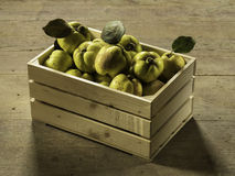 Ripe quince in a wooden crate Royalty Free Stock Photo