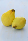 Ripe quinces. Fresh ripe quinces on blue textured background Royalty Free Stock Images