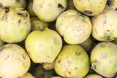 Ripe quinces in a market in Arequipa, Peru. Royalty Free Stock Image
