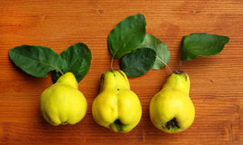 Ripe quinces Stock Images