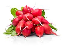 Ripe radish bundle, isolated on white background. Red or pink radish with green leaves, salad vegetables Royalty Free Stock Photo