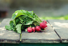 Ripe radish on wooden table background. Farmers food still life. Shallow depth field, selective focus.  Stock Images