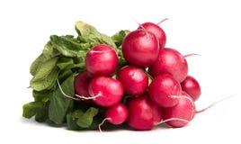 Ripe radishes Stock Image